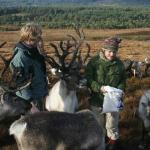Cairngorm Reindeer Herd