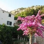Villa Doris Apartments Stikovica의 사진