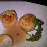  scallops