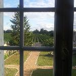  The view of the vines from our room