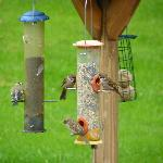  View of birds feeding from breakfast room