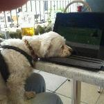 rowley as andy murray crashes out at wimbledon 2012. watched via free wifi at the steamer