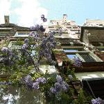 Casa Luna entrance with wisteria