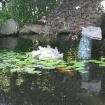 The wonderful koi pond