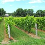 Sandbanks Vacations Wine & Specialty Tours