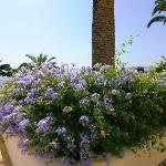  Ionian flowers