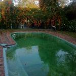 Winter Pool with Trumpet Vine in Flower