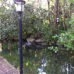 Lovely water features throughout the property