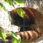 The Red Panda was our favorite : )