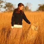 Walk with Lions at Antelope Park, Zimbabwe