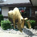 The Golden Moose!