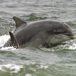 Gairloch Marine Wildlife Centre & Cruises