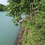 View from dock at Kenai river - moose is getting out of the river