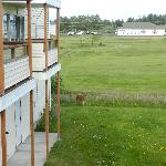 Foto de Ocean Shores Inn & Suites