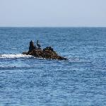 Photo of Channel Islands Whale Watching