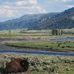 Beautiful Lamar valley in northeast Yellowstone