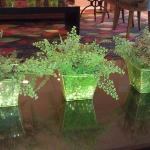 decorative plants in lobby