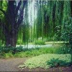 The Willows Foto