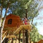  The Tree-house