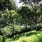  Cardamom plantation