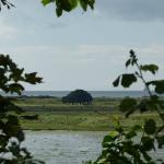  Bull Island view with zoom lens by peeking through foliage-covered neighborhood fence