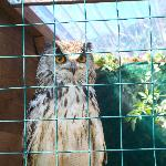 Owl enclosures surrounded by beautiful gardens
