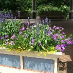  Flower boxes in July
