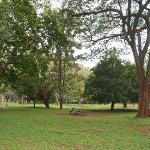Nairobi Arboretum