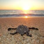 Tortugueros Las Playitas Sea Turtle Conservation Project