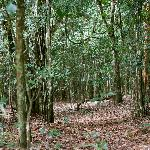 Karura Forest Reserve