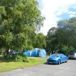 Mixture of road, grass and trees at Holmsley Campsite