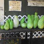  papayas for sale out front