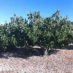 Fruit trees located on the property