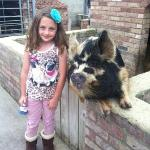  Nina and a rather friendly pig