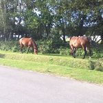 ponies just outside the site