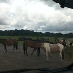ponies gathered as we left