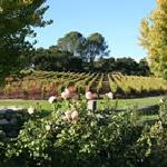 Bacchus Culinary Adventures and Wine Tours