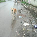  Stray dogs are a prob in India, careful because of rabies