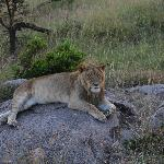 Photo of Encounter Mara Safari Camp by Asilia Africa