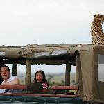 Hitchhiker Cheetah