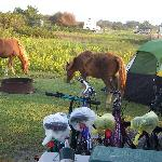  Woke up to ponies outside the RV