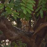 Many hours spent in search of this Leopard