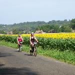 Cycling by the sunflowers near Siorac