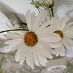  daisy retreat - fresh flowers in the room