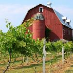 Barn with a vineyard.