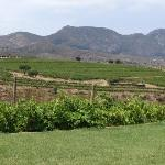 view to the wineyard