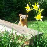  Little bear in the yard