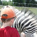 Up close with the zebras
