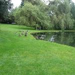  Goose and duck pond