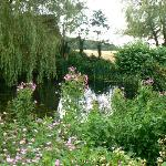 pretty garden pond viewed from our bedroom
